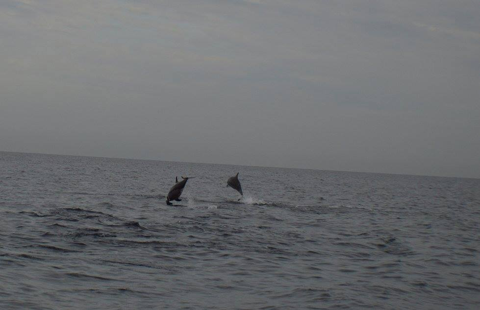 bali dolphins2