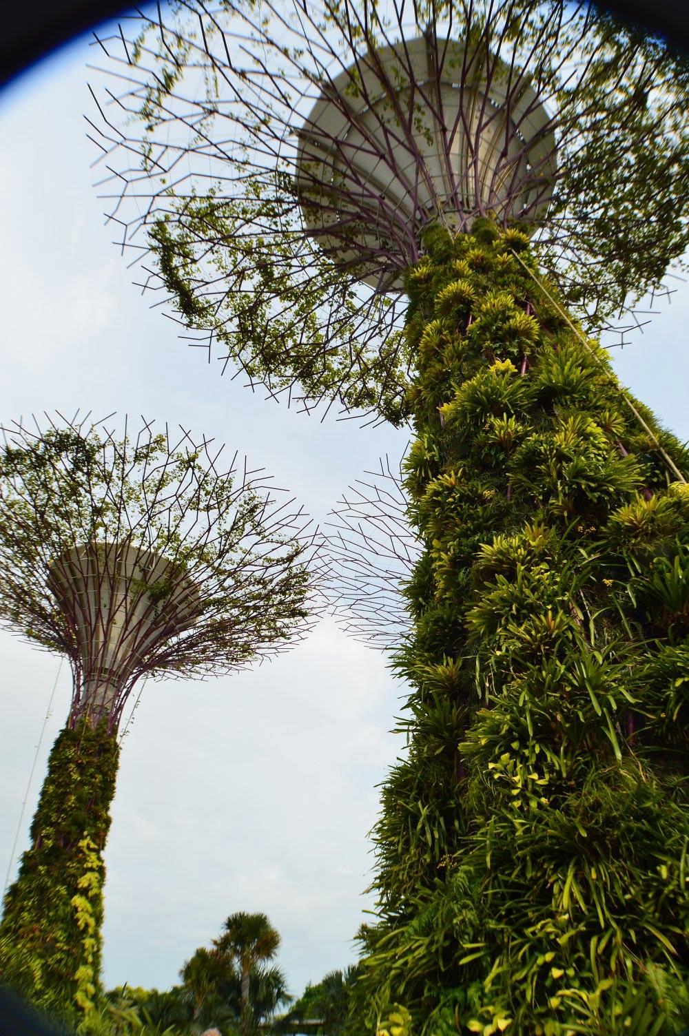 Singapore trees1