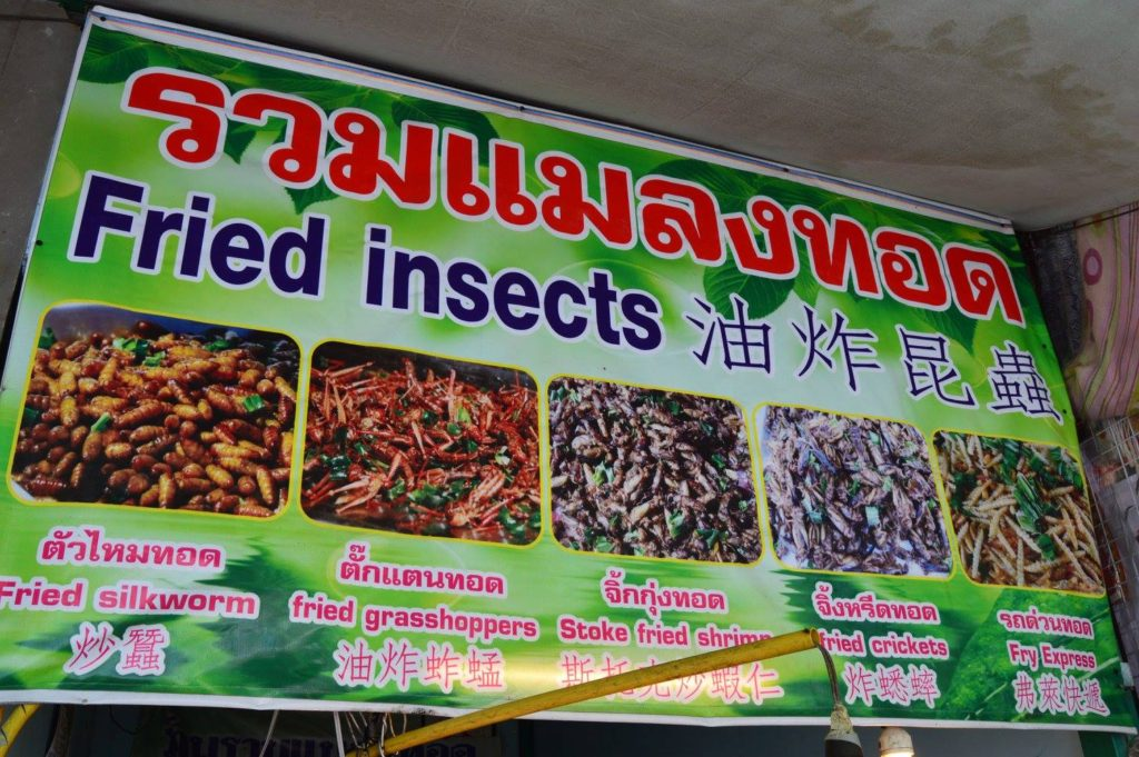 Chiang Rai Insects