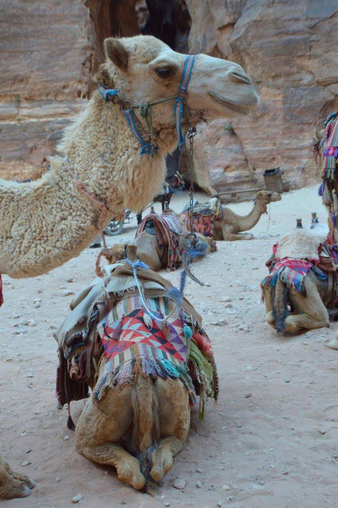 I really enjoyed the camels